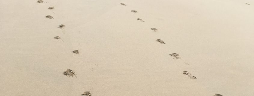 Esthers Footprints 845x321